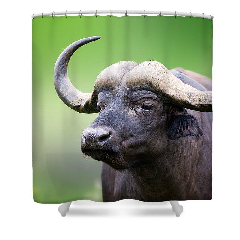 Buffalo Shower Curtain featuring the photograph African Buffalo Portrait by Johan Swanepoel