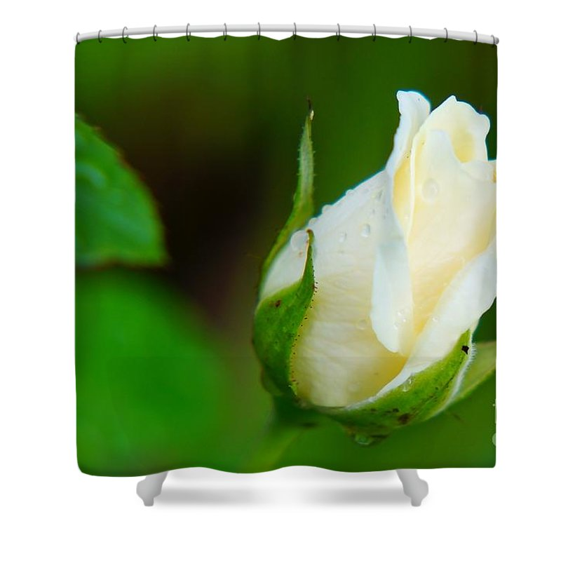 Rose Shower Curtain featuring the photograph After The Rain by Zori Minkova