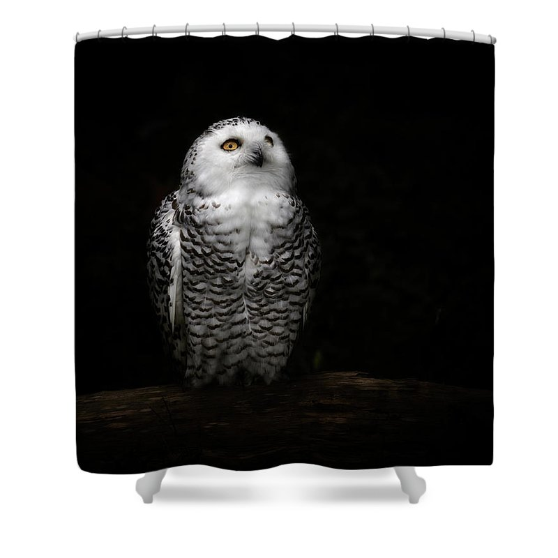 Animal Themes Shower Curtain featuring the photograph An Owl by Kaneko Ryo