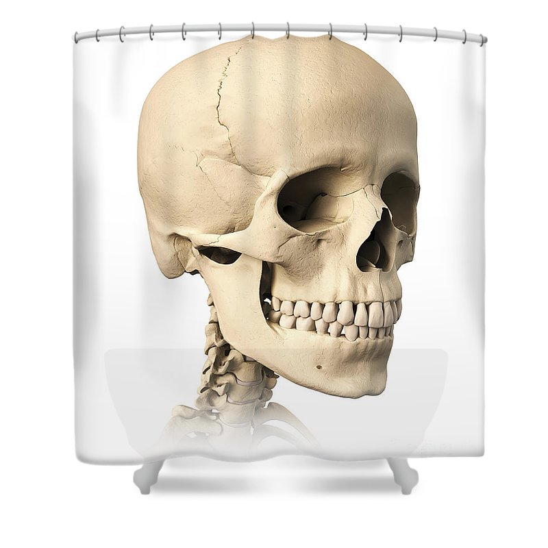 Anatomy Shower Curtain featuring the digital art Anatomy Of Human Skull, Side View by Leonello Calvetti
