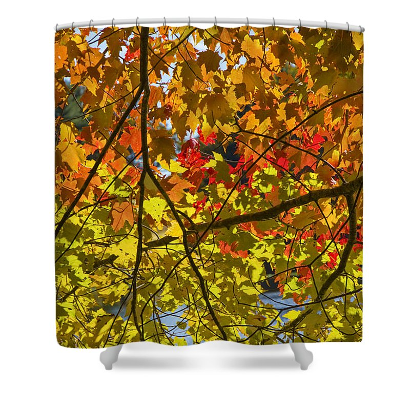 Art Shower Curtain featuring the photograph Autumn Maple Leaves by Randall Nyhof