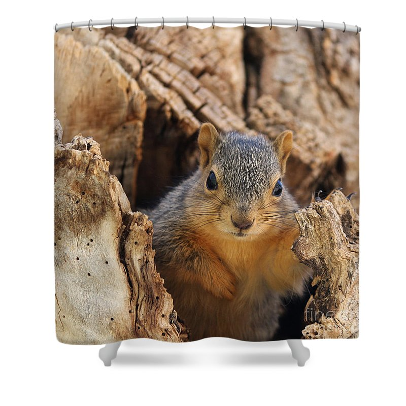 Squirrel Shower Curtain featuring the photograph Baby Fox Squirrel by Lori Tordsen