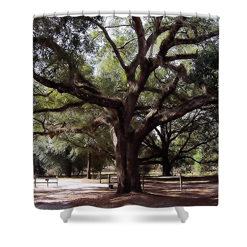Oak Shower Curtain featuring the photograph Beautiful Oak by D Hackett