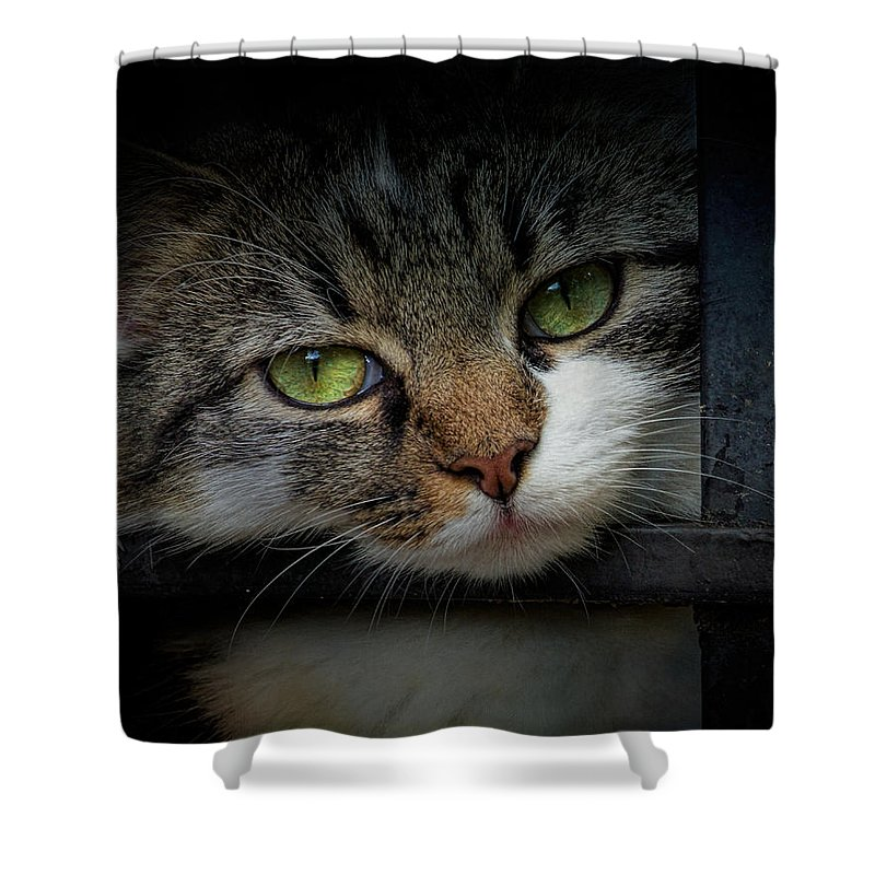 Animal Shower Curtain featuring the photograph Behind Bars by Jai Johnson