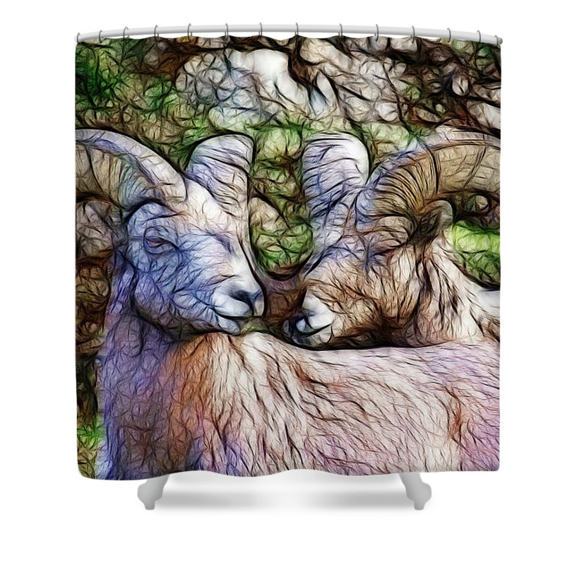 Bighorn Sheep Shower Curtain featuring the photograph Bighorns by Steve McKinzie