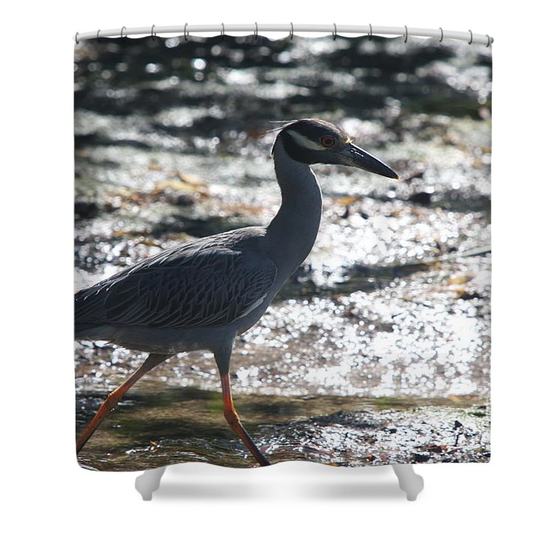 Night-heron Shower Curtain featuring the photograph Black-crowned Night-heron by Christiane Schulze Art And Photography