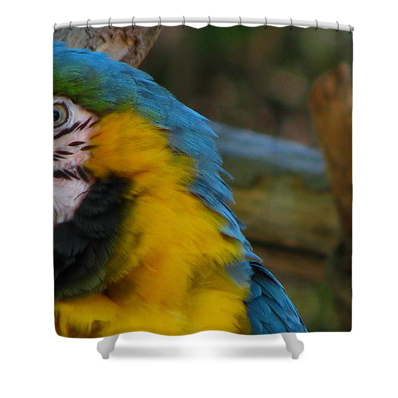 Patzer Shower Curtain featuring the photograph Blue And Gold by Greg Patzer
