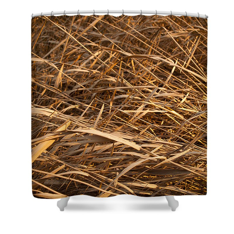 Background Shower Curtain featuring the photograph Brown Reeds by Tim Hester