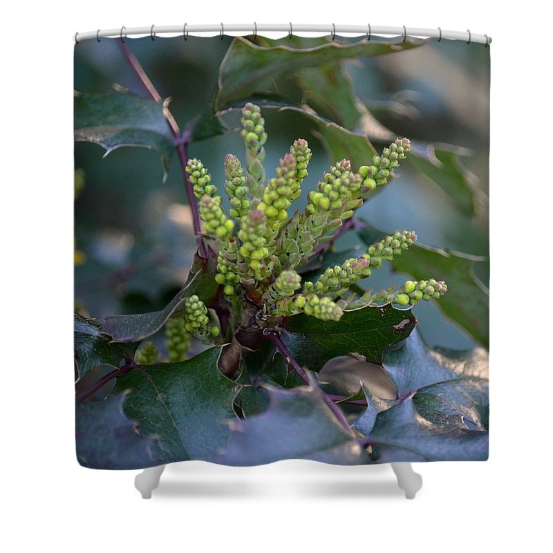 Budding Mahonia Shower Curtain featuring the photograph Budding Mahonia by Maria Urso