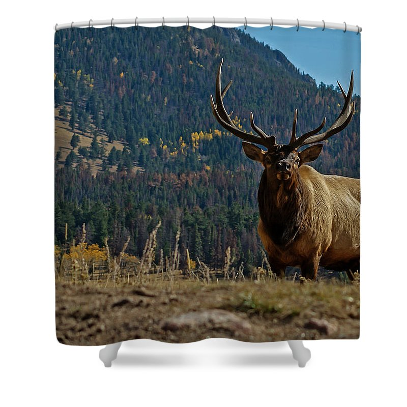 Bull Elk Shower Curtain Featuring The Photograph By Ernie Echols