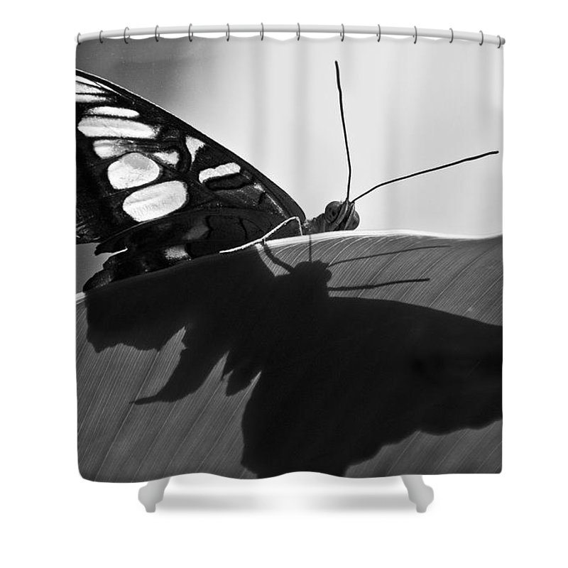 Butterfly Shower Curtain featuring the photograph Butterfly II by Ron White
