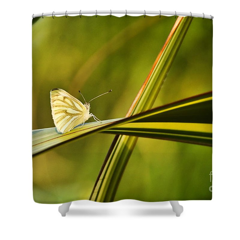 Cabbage Butterfly Shower Curtain featuring the photograph Cabbage Butterfly by Susie Peek
