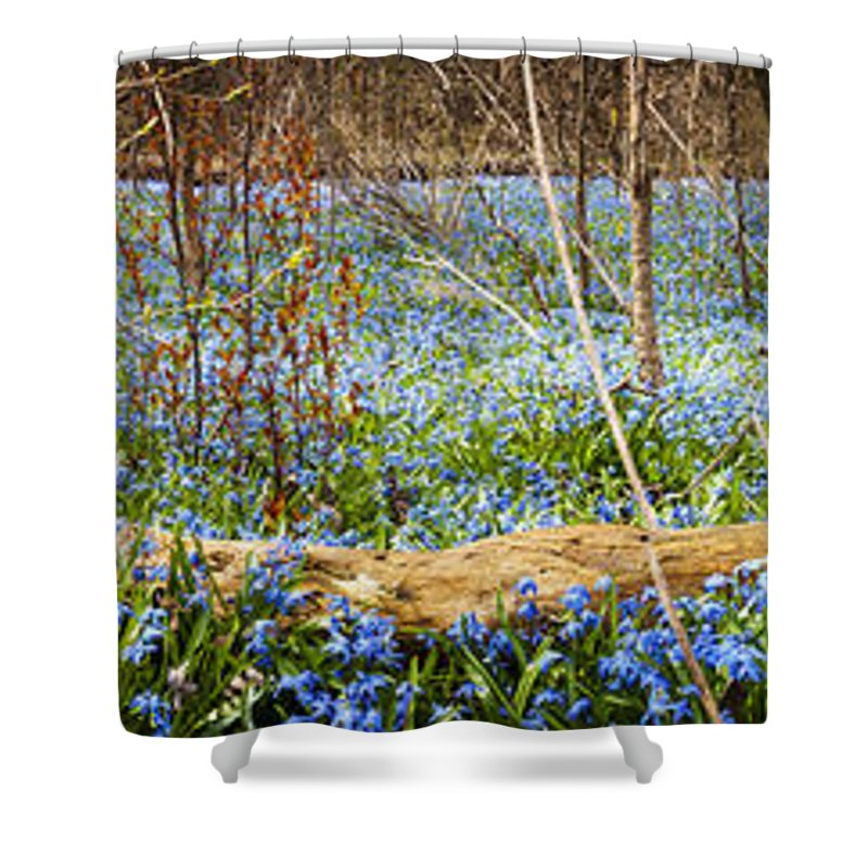 Flowers Shower Curtain featuring the photograph Carpet Of Blue Flowers In Spring Forest by Elena Elisseeva