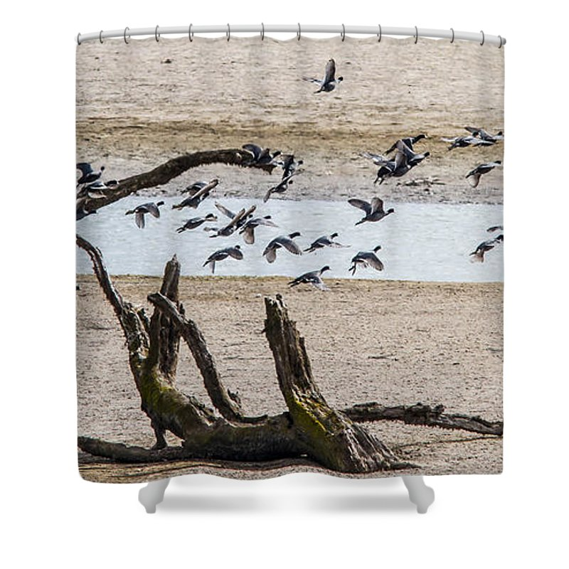 Ducks Shower Curtain featuring the photograph Coots-mud Hens by Brian Williamson