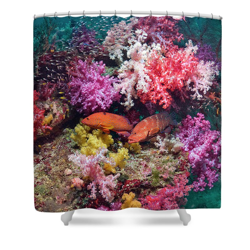 Tranquility Shower Curtain featuring the photograph Coral Reef Scenery by Georgette Douwma