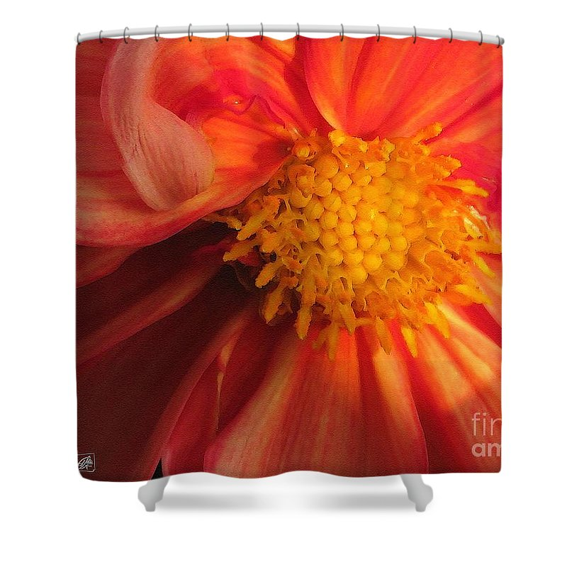 Mccombie Shower Curtain featuring the painting Dahlia From The Showpiece Mix by J McCombie