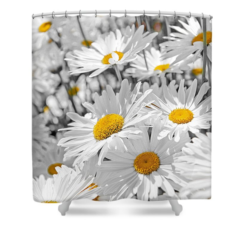 Daisies Shower Curtain featuring the photograph Daisies In Garden by Elena Elisseeva