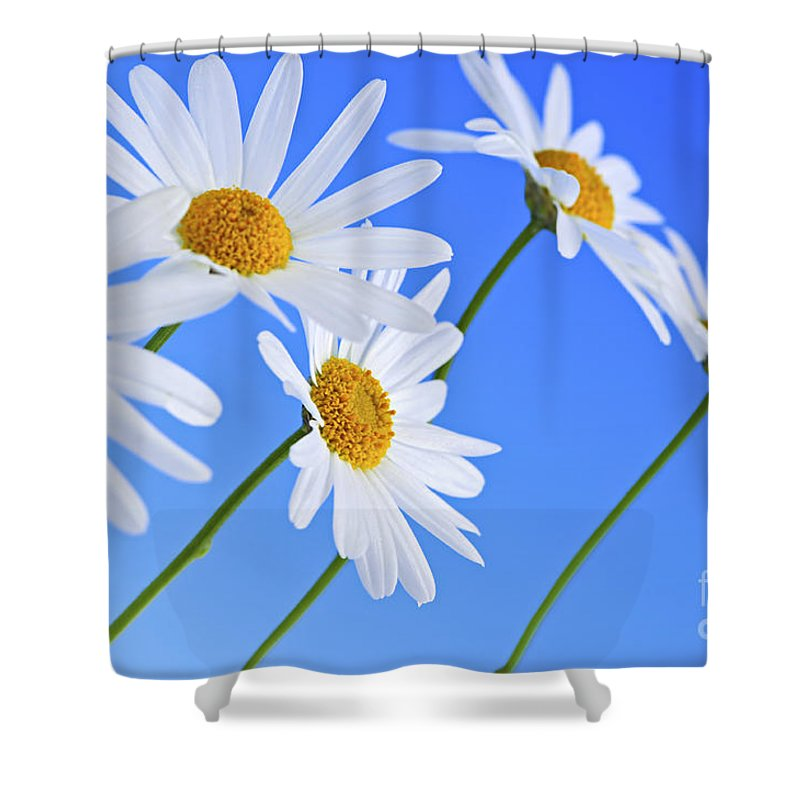 Daisy Shower Curtain featuring the photograph Daisy Flowers On Blue Background by Elena Elisseeva