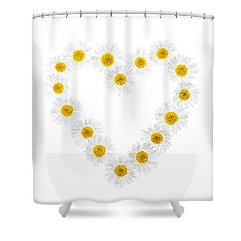 Daisy Shower Curtain featuring the photograph Daisy Heart by Elena Elisseeva