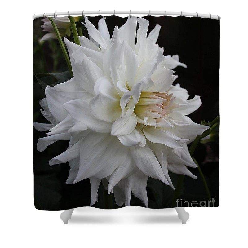 Flower Shower Curtain featuring the photograph Darling Dahlia by Kathy DesJardins