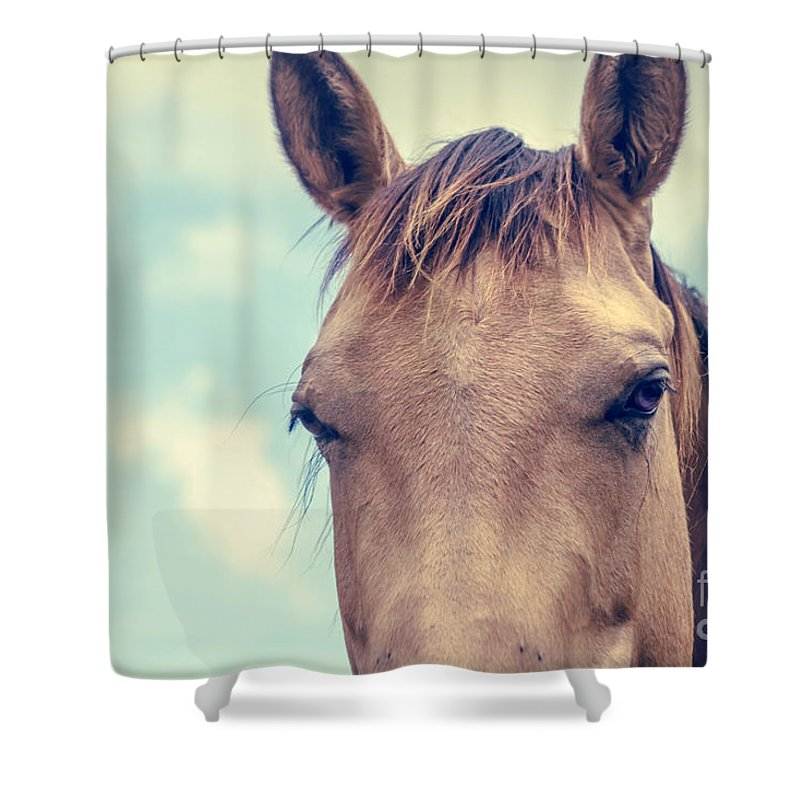 Horse Shower Curtain featuring the photograph Dimensions Of A Heart by Sharon Mau
