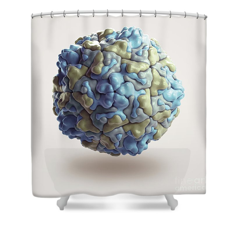 Enteric Shower Curtains