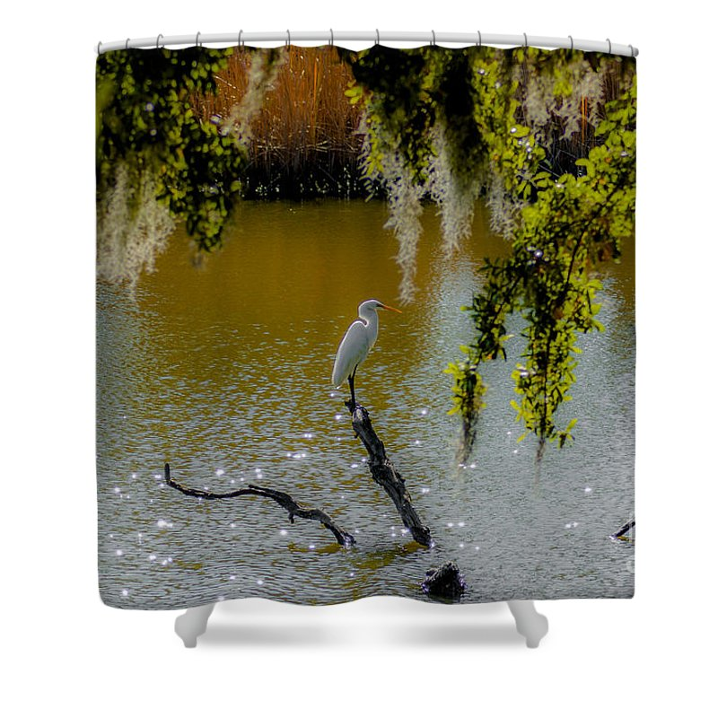 White Heron Shower Curtain featuring the photograph Egret by Dale Powell