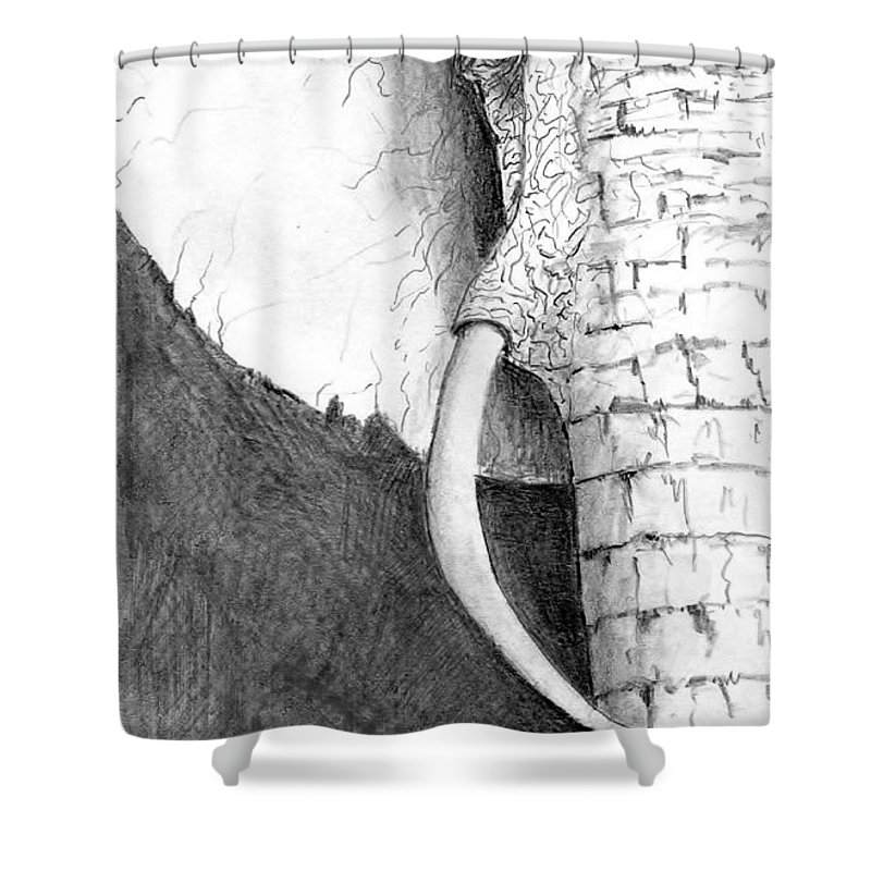 Elephant Shower Curtain featuring the painting Elephant Study by Steven Schultz