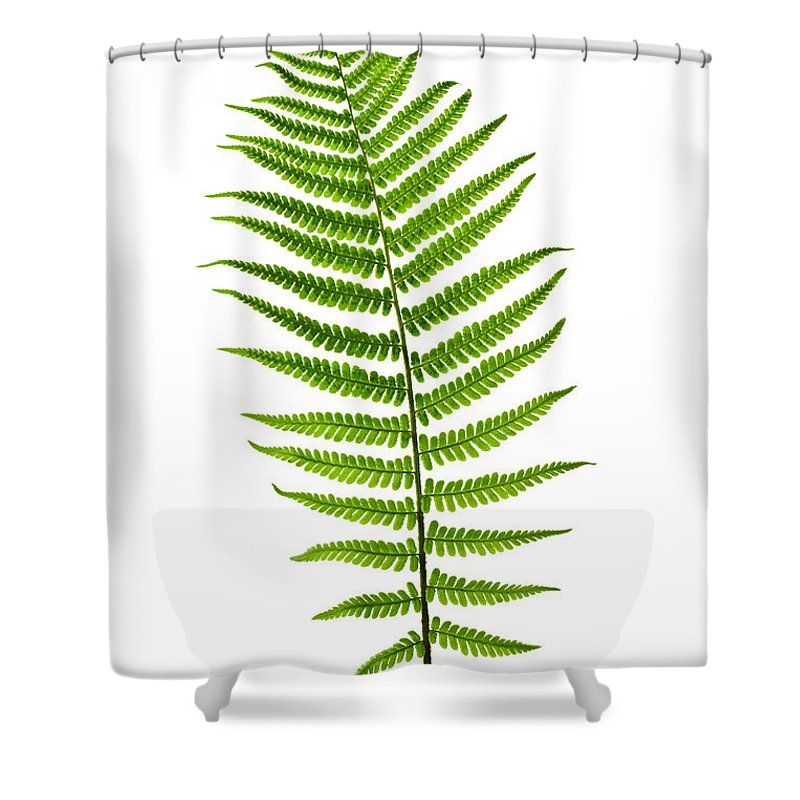 Fern Shower Curtain Featuring The Photograph Leaf By Elena Elisseeva