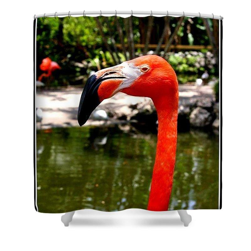 Florida Pink Flamingo - Florida - Flamingos - Nature Shower Curtain featuring the photograph Florida Pink Flamingo by Dora Sofia Caputo Photographic Design and Fine Art