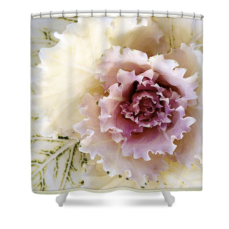 Flower Shower Curtain featuring the photograph Flower by Les Cunliffe