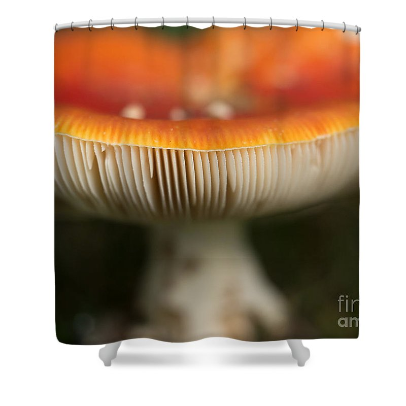 Amanita Muscaria Shower Curtain featuring the photograph Fly Agaric by Brothers Beerens