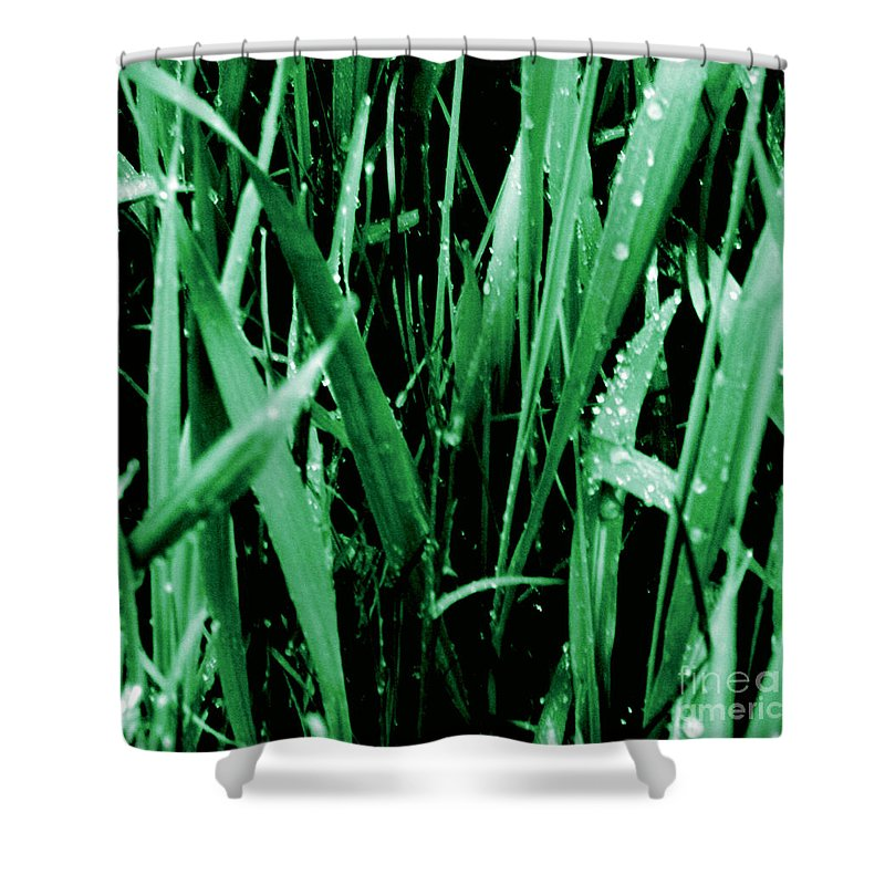 Jamie Lynn Gabrich Shower Curtain featuring the photograph Forlorn by Jamie Lynn