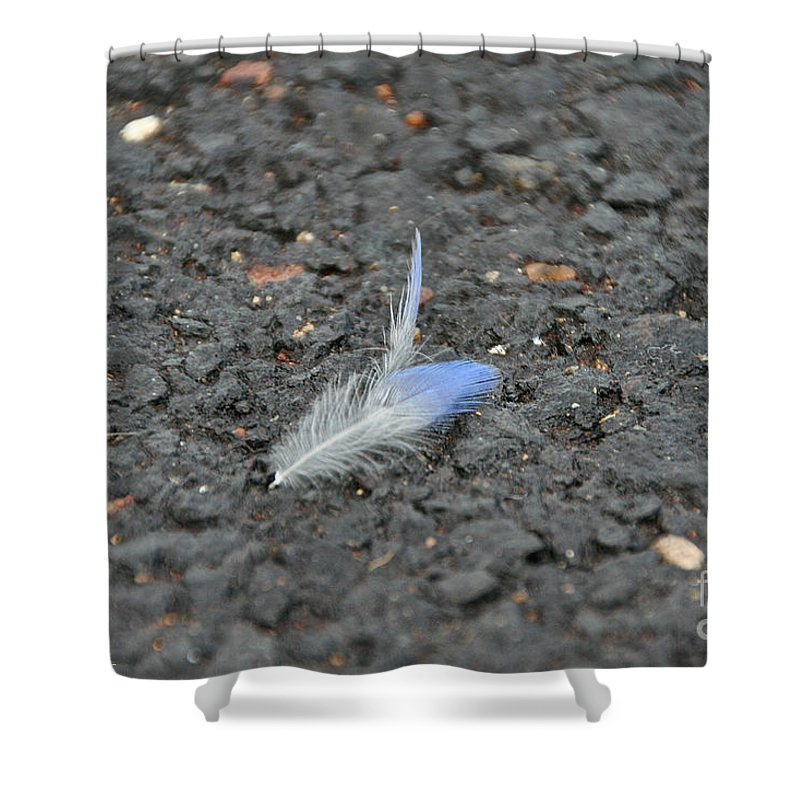 Bird Shower Curtain featuring the photograph Found Feather by Susan Herber