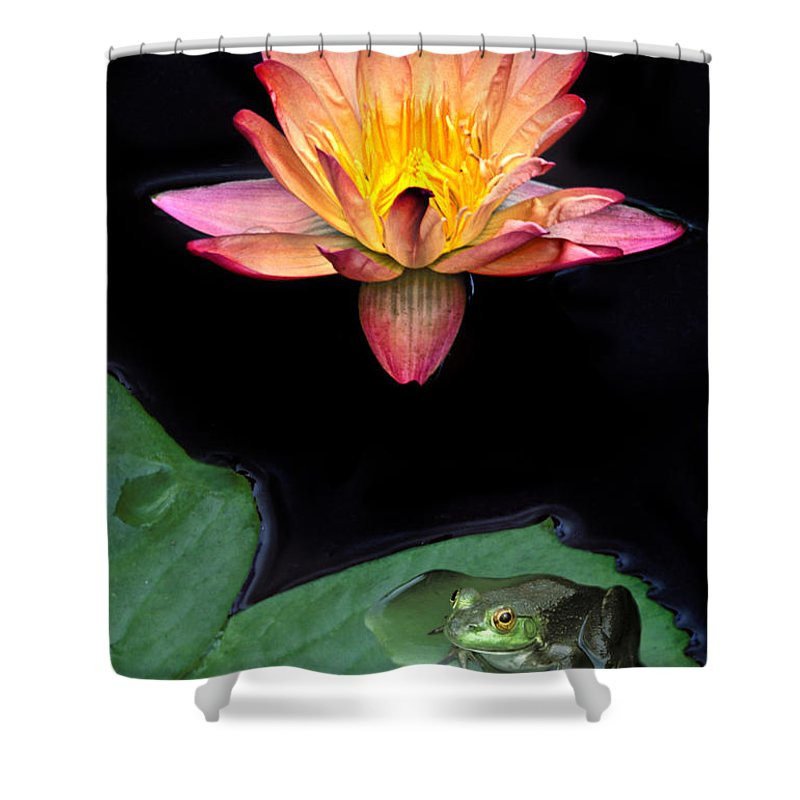Frog Shower Curtain featuring the photograph Frog And Waterlily by Dave Mills