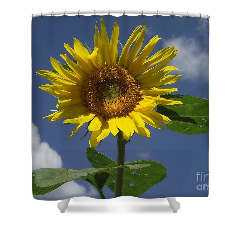 Sunflower Shower Curtain featuring the photograph Good Morning Sunshine by Michelle Welles