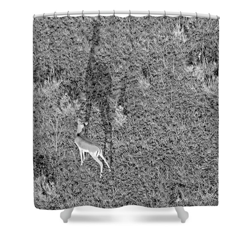 Gazelle Shower Curtain featuring the photograph Grants Gazelle by Tony Murtagh