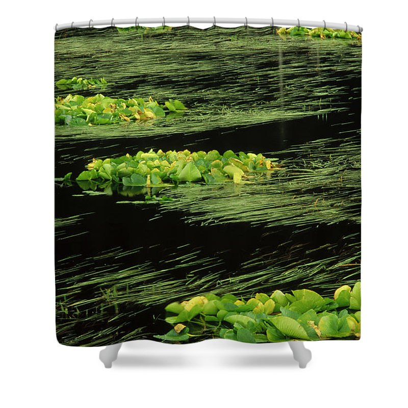 Alaska Shower Curtain featuring the photograph Grasses And Lilies In Beaver Pond by Gerry Ellis