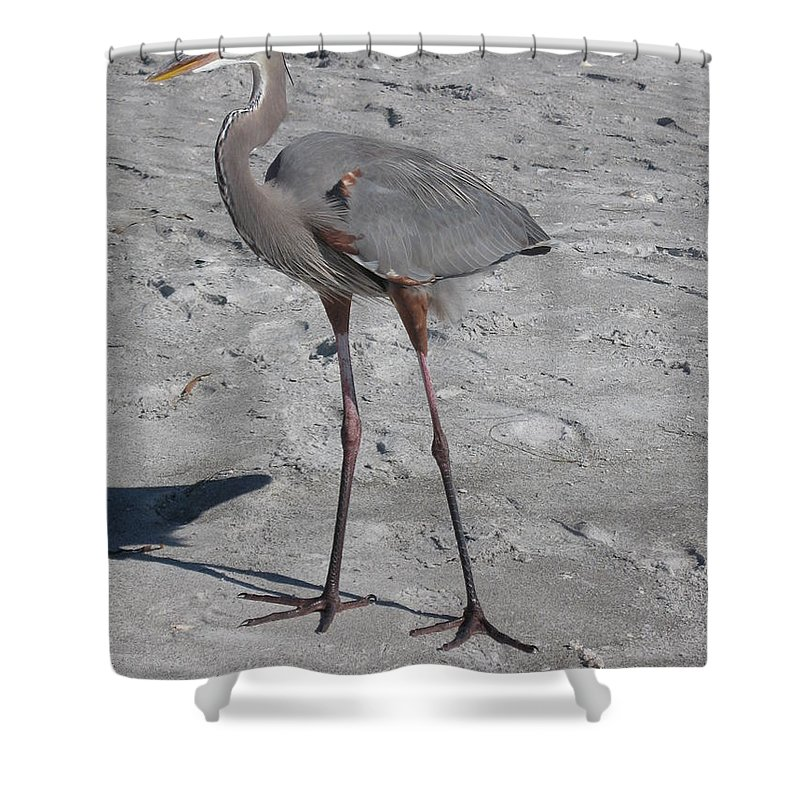 Heron Shower Curtain featuring the photograph Great Blue Heron On The Beach by Christiane Schulze Art And Photography