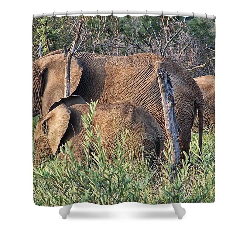 Elephant Bull Shower Curtain featuring the photograph Greener Pastures by Douglas Barnard