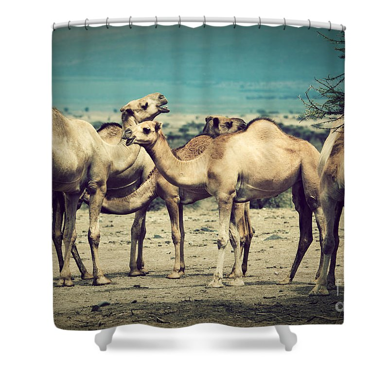 Camel Shower Curtain featuring the photograph Group Of Camels In Africa by Michal Bednarek