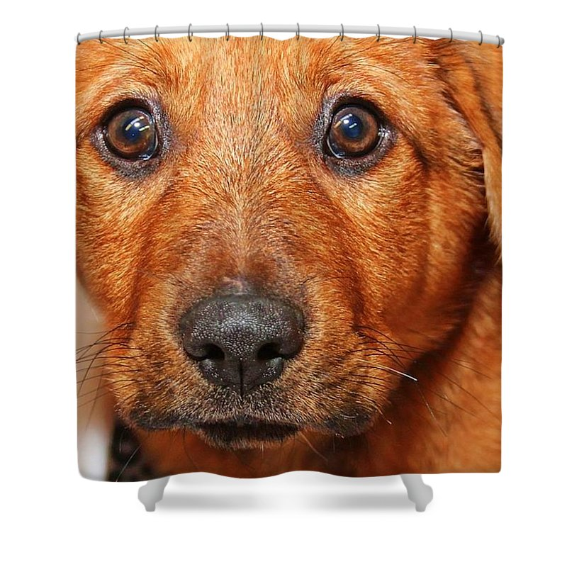 Puppy Shower Curtain featuring the photograph Hello by Joyce Baldassarre