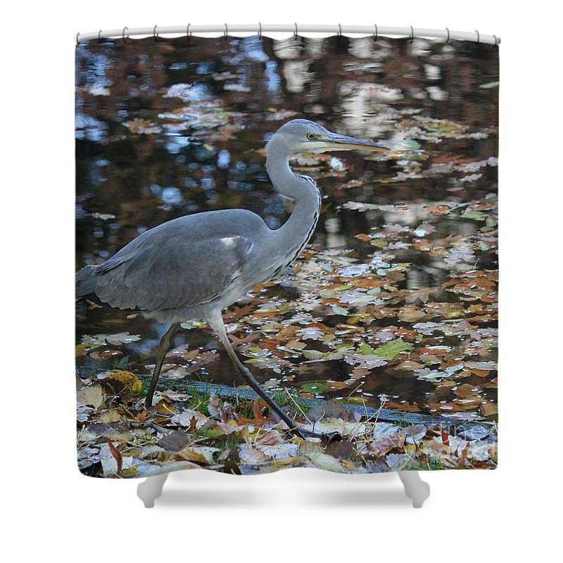 Herons Shower Curtain featuring the photograph Heron On The River by Four Hands Art