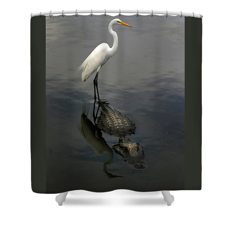 Alligator Shower Curtain featuring the photograph Hitch Hiker by Anthony Jones
