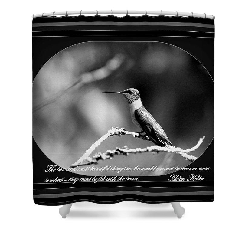Hummingbird Shower Curtain featuring the photograph Hummingbird by Travis Truelove