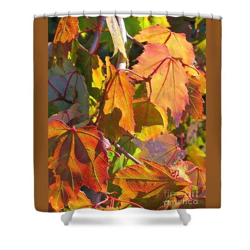 Autumn Shower Curtain featuring the photograph Illumining Autumn by Ann Horn