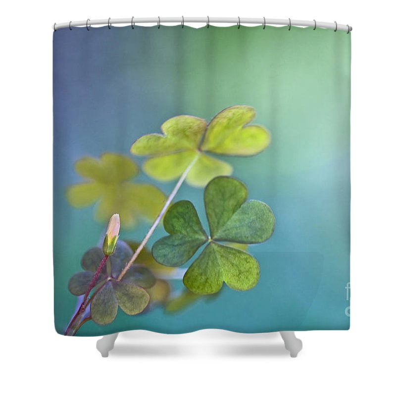 Oxalis Shower Curtain featuring the photograph In Love With Nature by Maria Ismanah Schulze-Vorberg