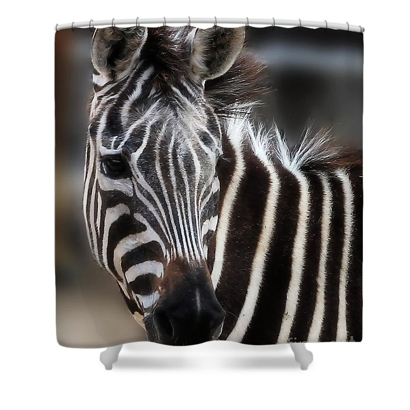 Zebra Shower Curtain featuring the photograph In The Moment by TN Fairey