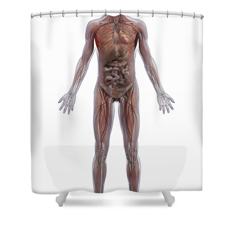 Transparent Shower Curtain Featuring The Photograph Internal Human Anatomy By Science Picture Co