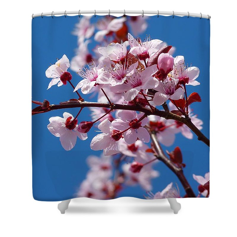 Japanese Cherry Tree Shower Curtain featuring the photograph Japanese Cherry Tree by Gallery Of Modern Art